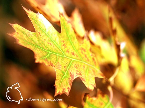 Un otoño lleno de novedades y promociones.