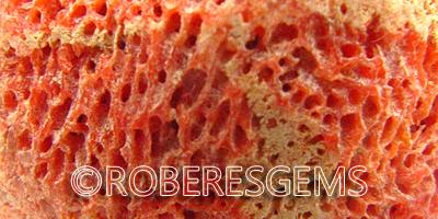 Coral esponja, Melithaea Ochracea, gema orgánica marina RoberesGems