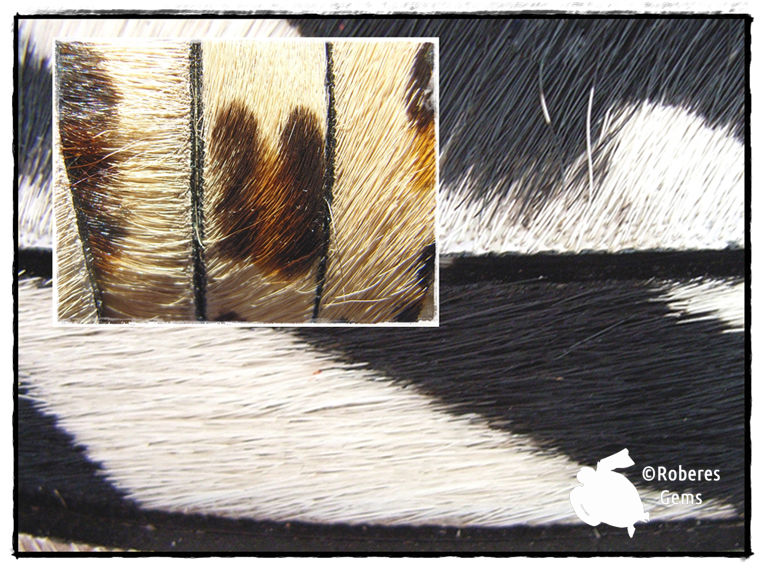 Colores de piel en animal print